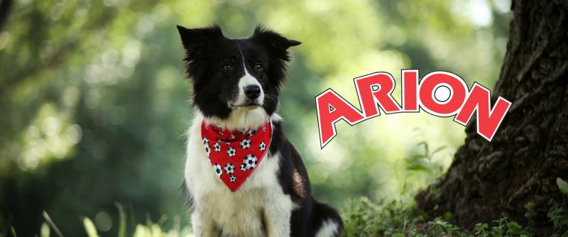 Az Arionnal az Aqua minden kutyusra gondol!